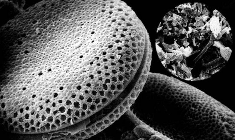 珪藻土電子顕微鏡写真3A22